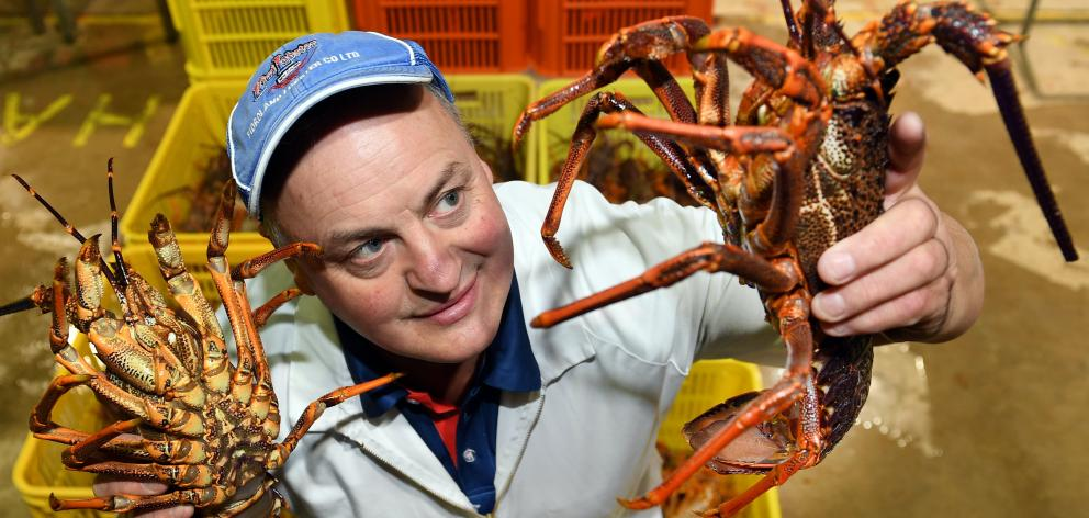 Chinese demand keeps price of lobster high | Otago Daily