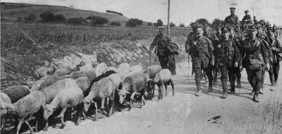 British troops bring a flock of sheep with them as they march along a road on the Western Front. ...
