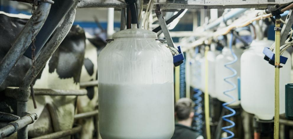 Westland Milk targets were not met during the year. Photo: Getty Images