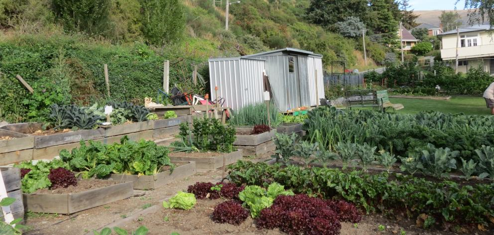 If you don't have room at home, look around for a community garden, like this one in Roxburgh....