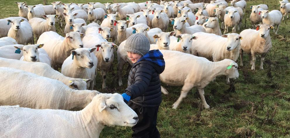 Jimmy Paterson (4) also checks out some sheep. Photo: Paterson family