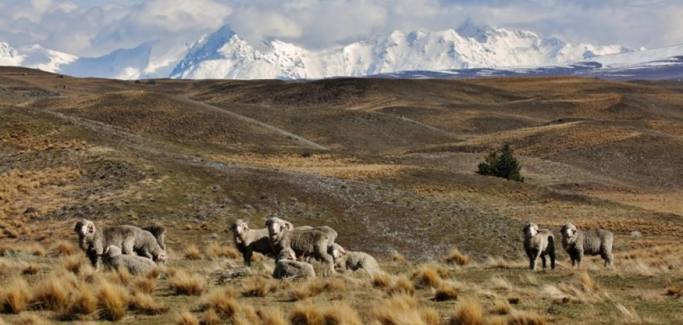 Mackenzie Basin high country. Photo: George Empson