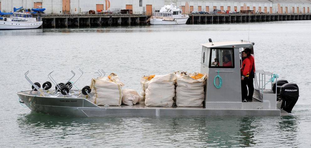 Southern Clams can begin harvesting in Otago Harbour again; pictured is purpose-built barge Tuaki bringing the first four-tonne load of cockles from the harbour back to the company's city factory in 2009. Photo: Stephen Jaquiery