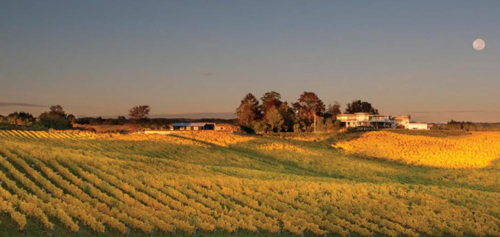 At its peak, the vineyard was spread over several sites and comprised more than 100 hectares of land in and around Moutere and Hope. Photo: Mahana Estates via RNZ