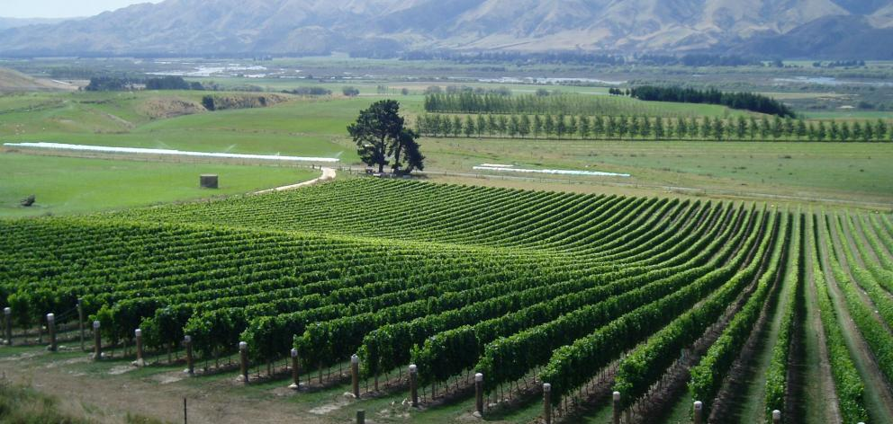 Ostler's ''Clos Ostler'' vineyard in the Waitaki Valley, with underlying limestone and alluvial...