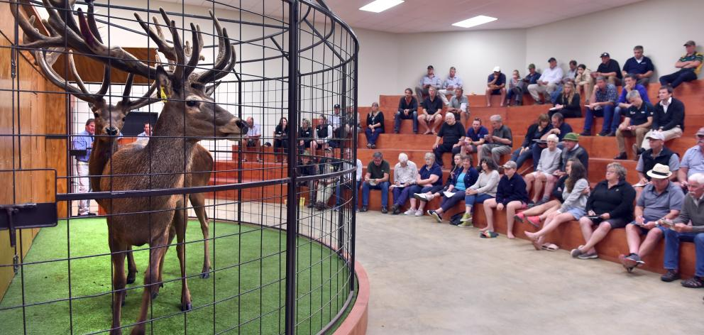 The gallery watches the sale at Black Forest Park.