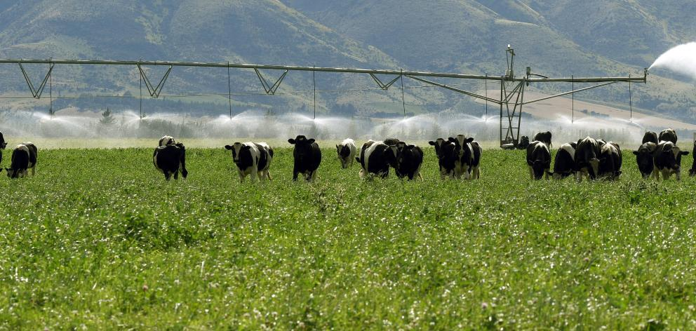 But meat and wool farmers are most positive about their current profitability; pictured, Friesian...