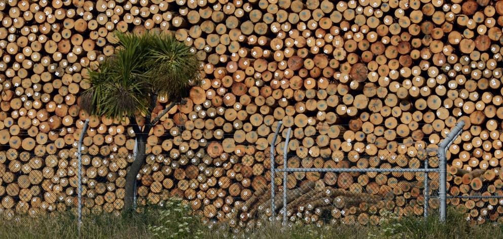 Exporters coming off record highs need to see there is diminishing demand for logs. Pictured,...