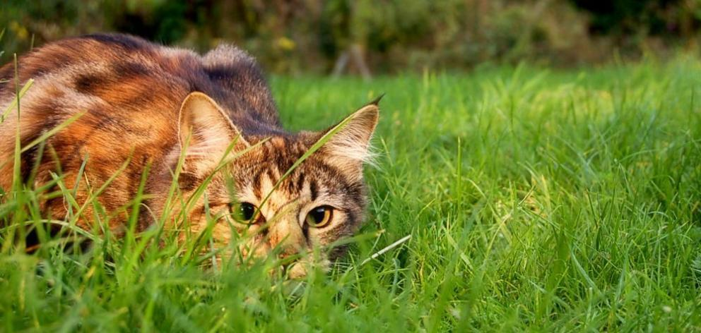 Under the plan, any domestic cat would have to be neutered and micro-chipped and people won't be...