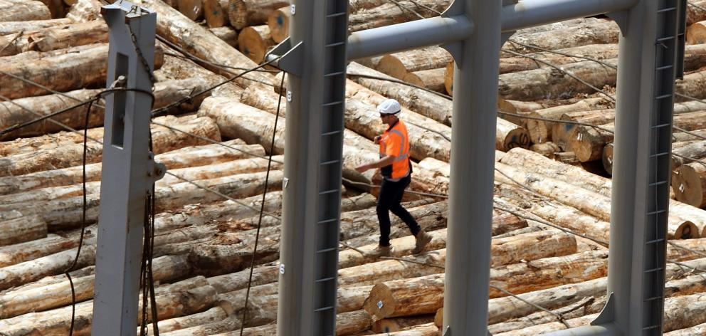 City Forest trees are loaded on a ship in Port Chalmers. PHOTO: STEPHEN JAQUIERY