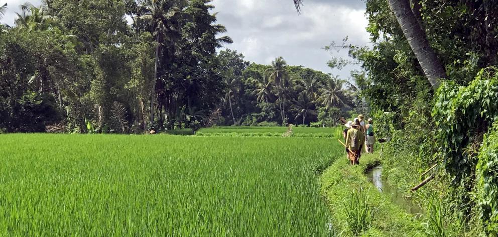 "Bambu Indah酒店的辛西娅·哈迪(Cynthia Hardy)通过乌布(Ubud)外的稻田进行""垃圾步行""。 ..."