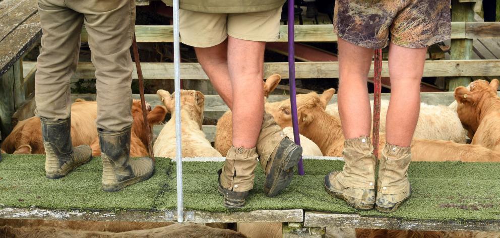 Farmers' legs on display.