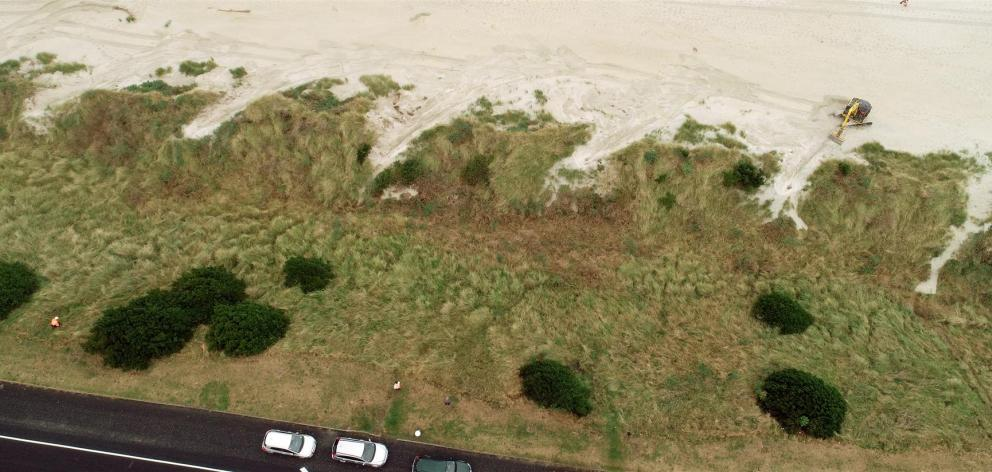 An excavator (top right) clears vegetation from notches carved into the sand dunes below John Wilson Ocean Dr yesterday, which is helping the dunes to grow. Photo: Stephen Jaquiery