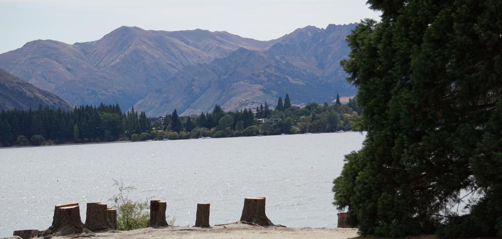 These cut trees on the Roys Bay foreshore identify the location where the construction of the...