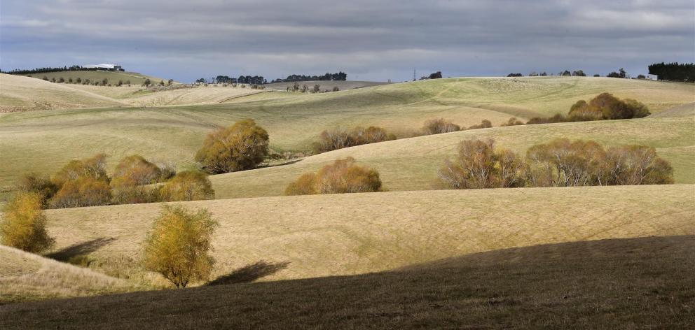 As leaves turn colour, marking autumn, bare paddocks south of Balclutha show a developing drought in South Otago. Photo: Stephen Jaquiery
