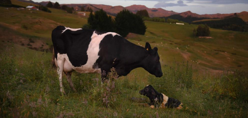 Stagnant global milk supply and robust demand is expected to support strong prices over the...
