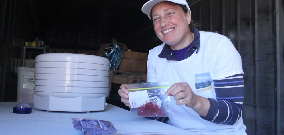 Kurow Saffron harvester Sarah Hines prepares the saffron stems for dehydration. PHOTO: GUS PATTERSON