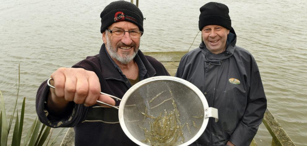Invercargill mates David King (left) and Graham Hicks added another 227g by the end of the day to this catch on the first day of the whitebaiting season on the Mataura River. Photos: Stephen Jaquiery