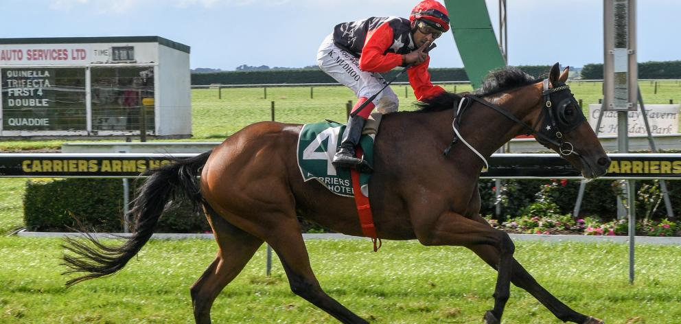 The Gordonian, one of two runners in the $100,000 Winter Cup at Riccarton today for Ascot Park...