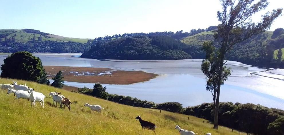 Goat Island Dairy. Photo: Supplied