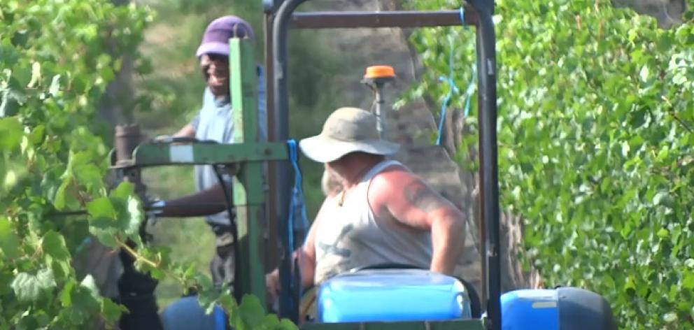 The horticulture and viticulture industries had previously called upon the government support amid labour shortages. Photo: ODT/file