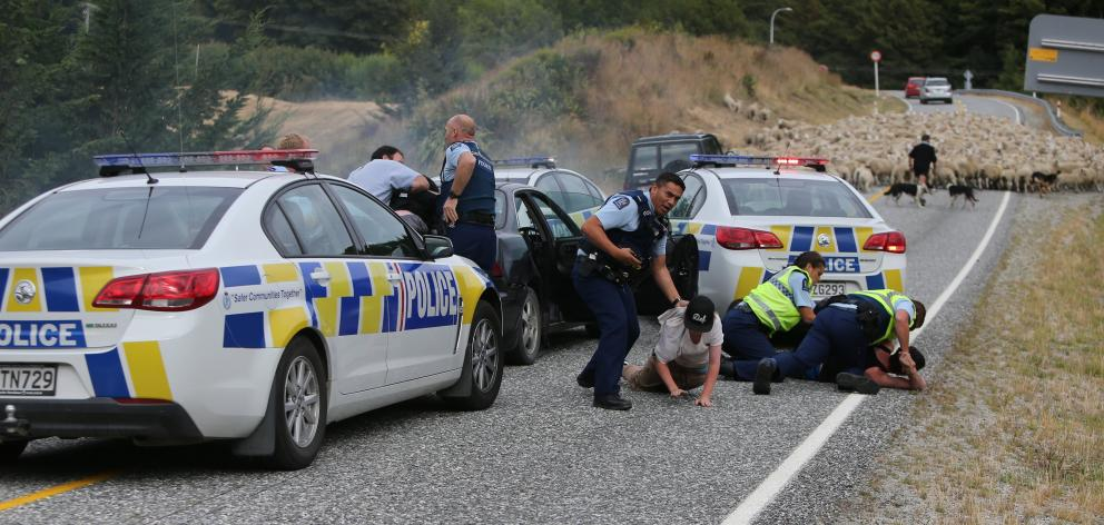 Sheep owned by Queenstown police officer Julian Cahill, being moved by manager Roy Webb and his dogs stopped a car chase in January 2016— this photo wonformer Allied Press freelance photographer Blair Pattinson the Canon Media Award for Best News Photo in