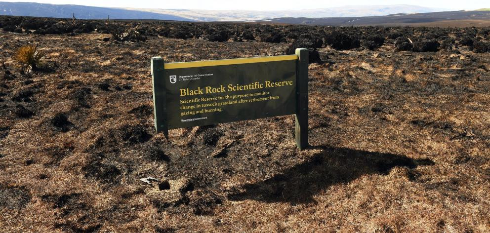 The Black Rock Scientific Reserve was devastated by the fire near Middlemarch. Photo: Stephen Jaquiery