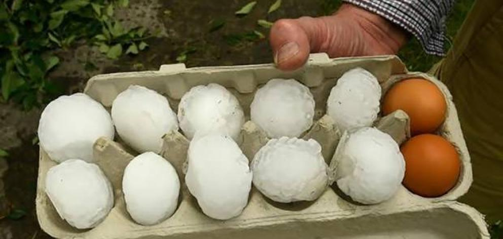An egg tray shows the scale of some of the hailstones. Photo: Luke McGoldrick