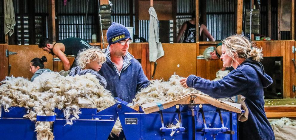 Murray and Julie Hellewell and daughter McKenna (2) inspect their farm's Perendale lamb fleece that is used for the couple's West Ridge jersey venture. Photo: Paula Williams