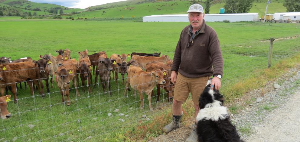Dairy farmer Jim Andrew, of Dipton, has milked once a day full time for 10 years and has found it made economic and environmental sense. Photos: Yvonne O'Hara