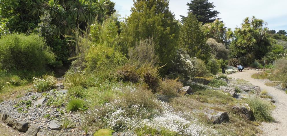 The mini mountaintop at Dunedin Botanic Garden. Photos: Clare Fraser