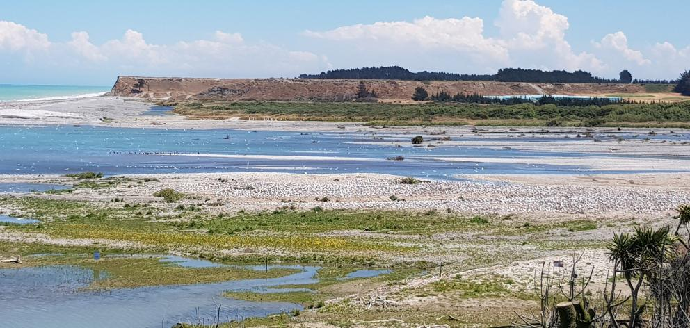 The management of the Ashburton River Mouth is a balancing act between recreational users and its...
