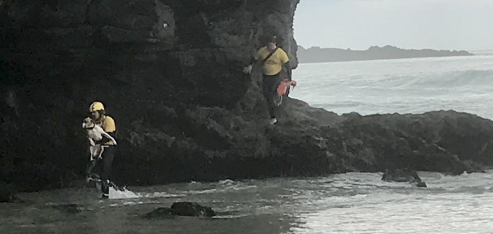 St Kilda Surf Life Saving Club lifeguards Felix Cook (left) and Sam Todd rescue the dog from a cliff at the north end of Tomahawk Beach. Photo: Supplied