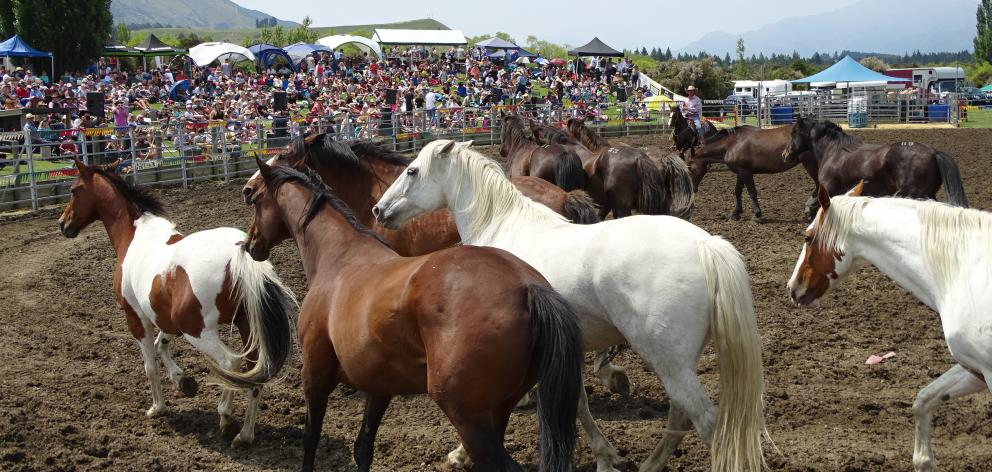 Bareback horse entrants had a taste of what was to come when the horses were given a run-around the arena before the event. Photos: Kerrie Waterworth
