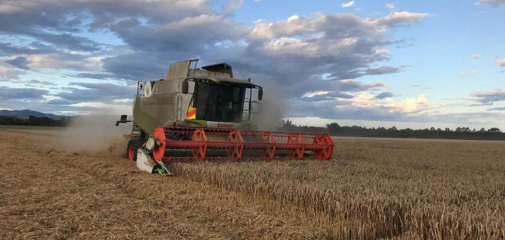 North Canterbury farmers Murray and Roscoe Taggart are enjoying one of their best seasons, with a...