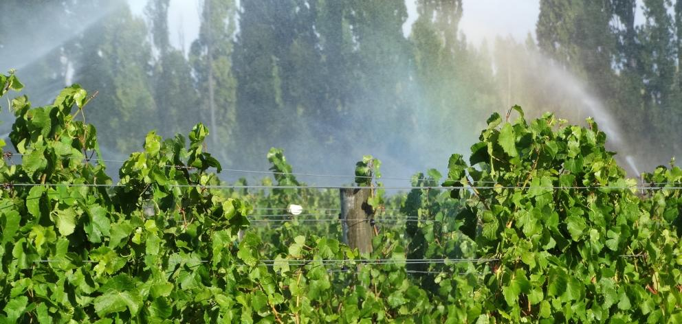 A Central Otago vineyard is irrigated. PHOTO: MARK PRICE