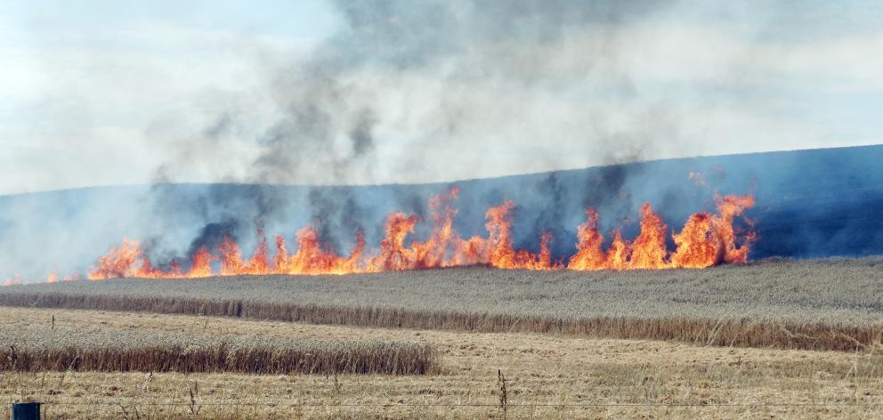 Flames leap skyward during a blaze at a farm near Kakanui in North Otago yesterday. Photo: Daniel Birchfield