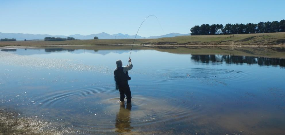 Chris McDonald, secretary of the Southland Fly Fishing Club, fishes over weed beds on Rutherford...