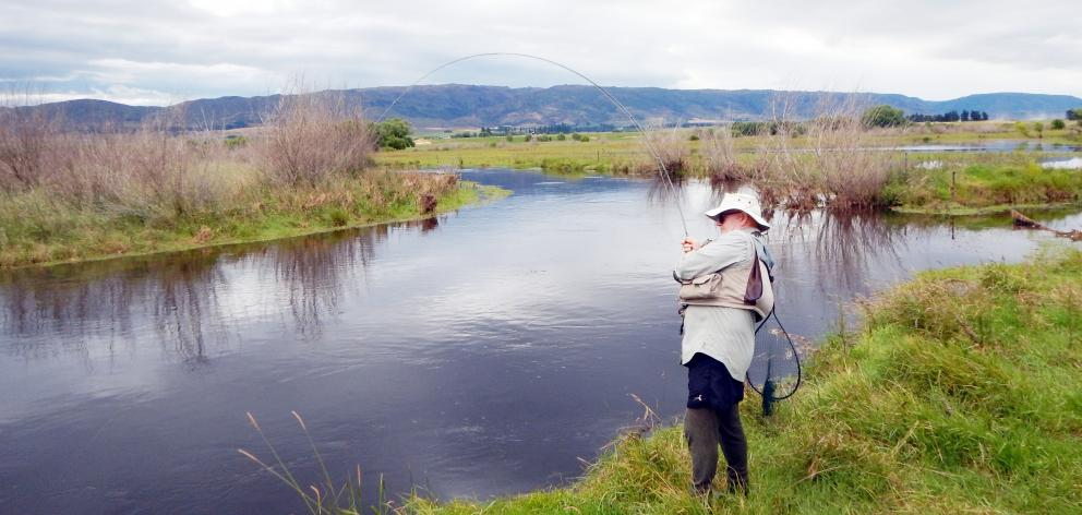 Murray Smart playing a good fish at the mouth of an upper Taieri backwater. Photo: Mike Weddell