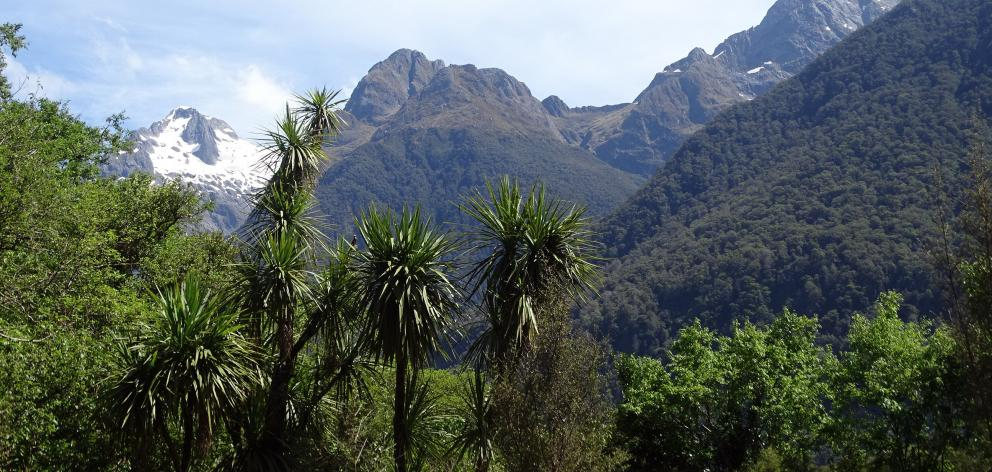 Hollyford's idyllic views captivate.