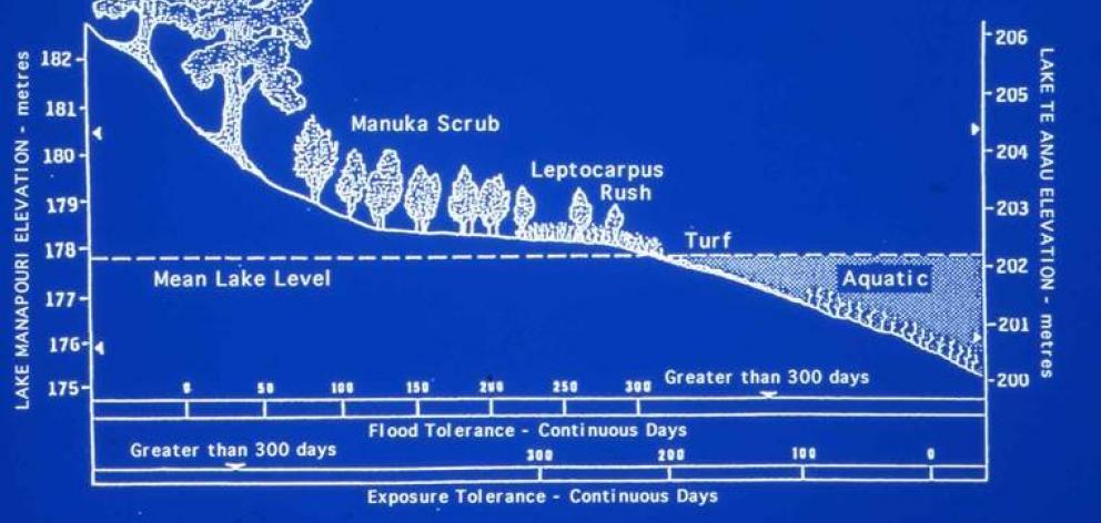 Lakes Manapouri and Te Anau shoreline vegetation tolerances to flood duration and exposure, based...