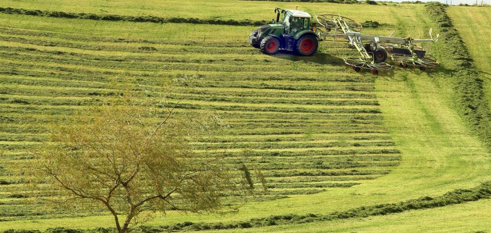 Silage is racked at Crichton, beside the Milton highway, on Sunday. PHOTO: STEPHEN JAQUIERY