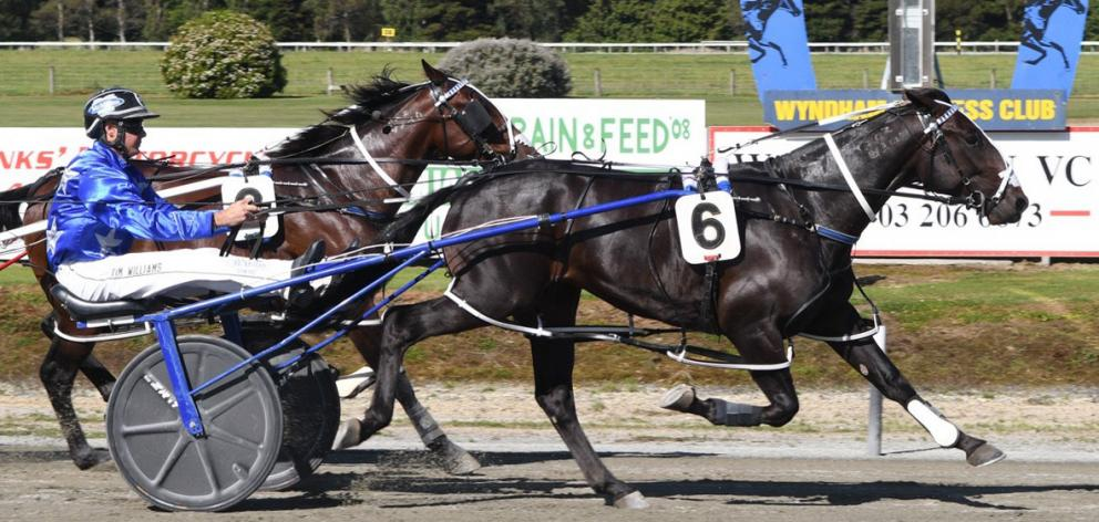 Driver Tim Williams continued his brilliant run of form when winning the Kindergarten Stakes at...