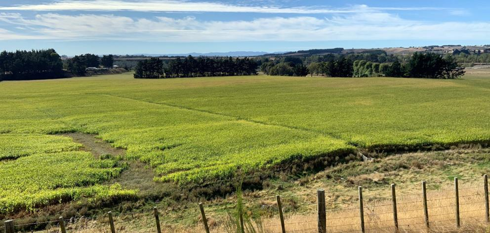 The green fields of Manawatu.