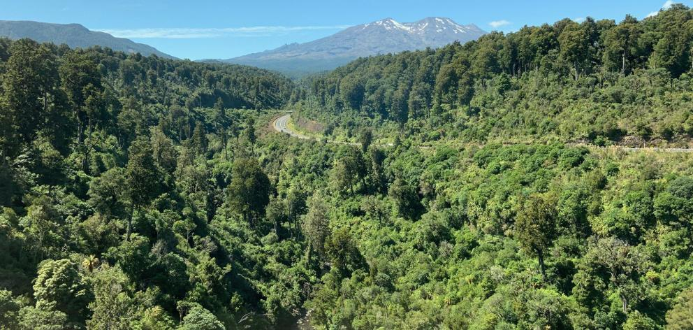 Native forest on the edge of the volcanic plateau.