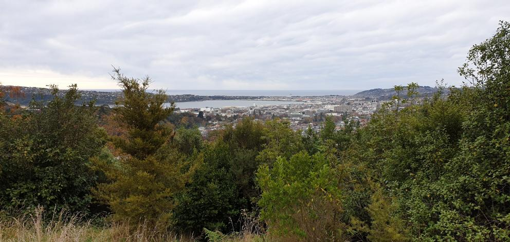 Dalmore Reserve has stunning views across the city towards St Clair. PHOTOS: CLARE FRASER