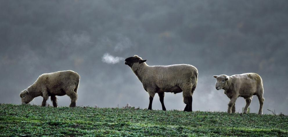 The red meat sector represents more than 12% of full-time employment in Otago-Southland. PHOTO:...