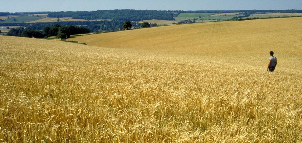 Arable farm crops. Photo: Getty Images