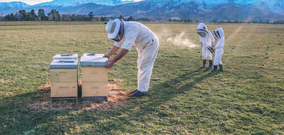 Honey is taken off the hives and brought straight back to the extracting facility in Kimbell by...