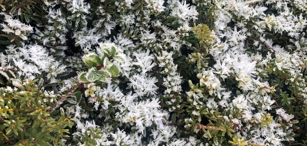 Some plants can withstand freezing temperatures. PHOTOS: ANNA CAMPBELL